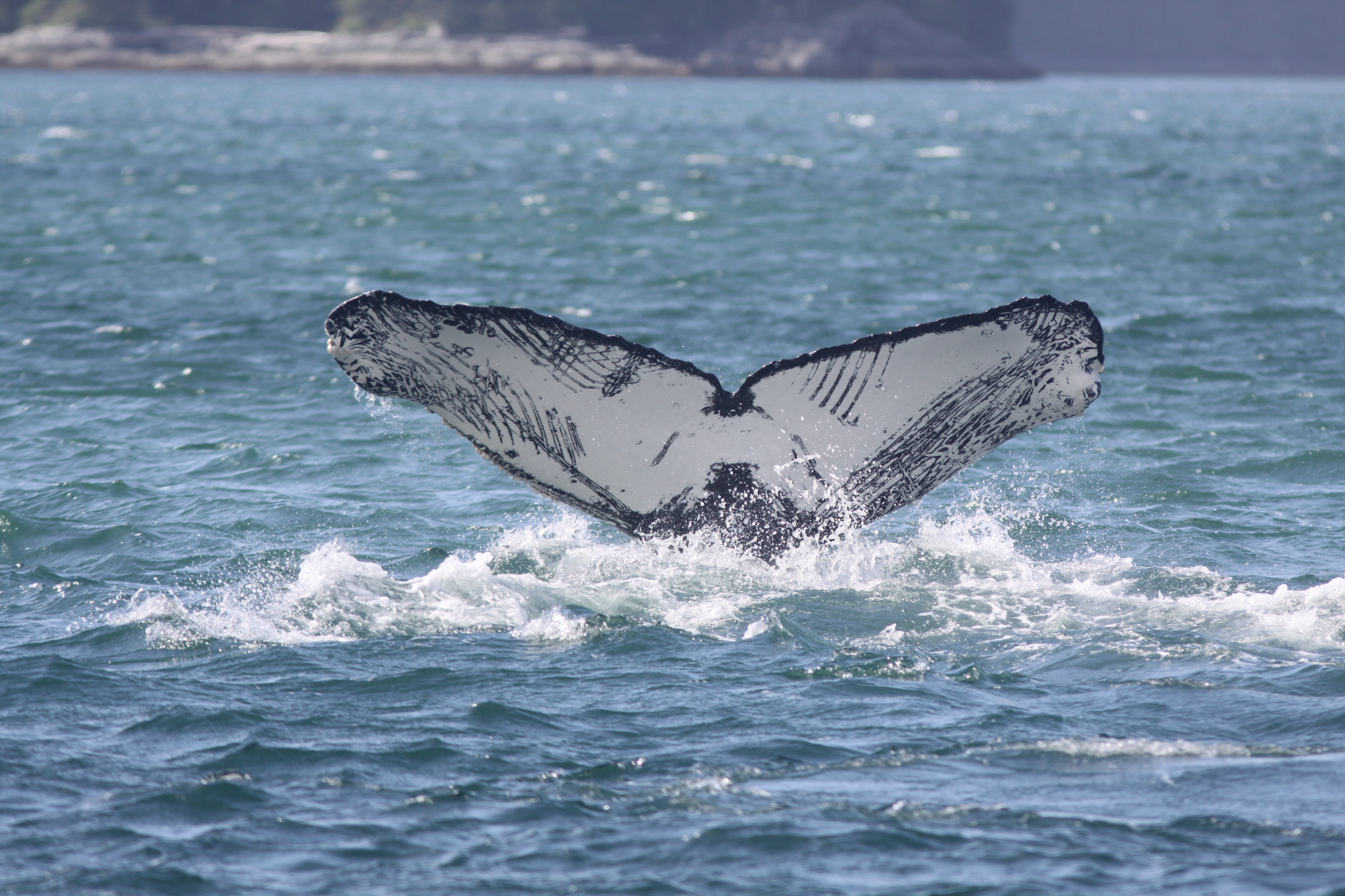Humpback whale research paper