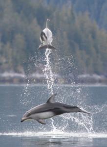 leapingdolphin