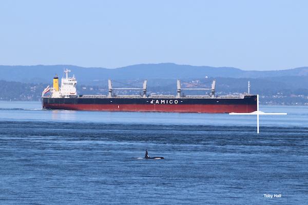 Southern Resident killer whale monitoring on San Juan Island